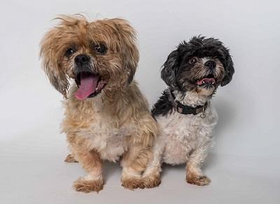 Kiwi-and-Kiki