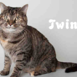 twinkie_phixr