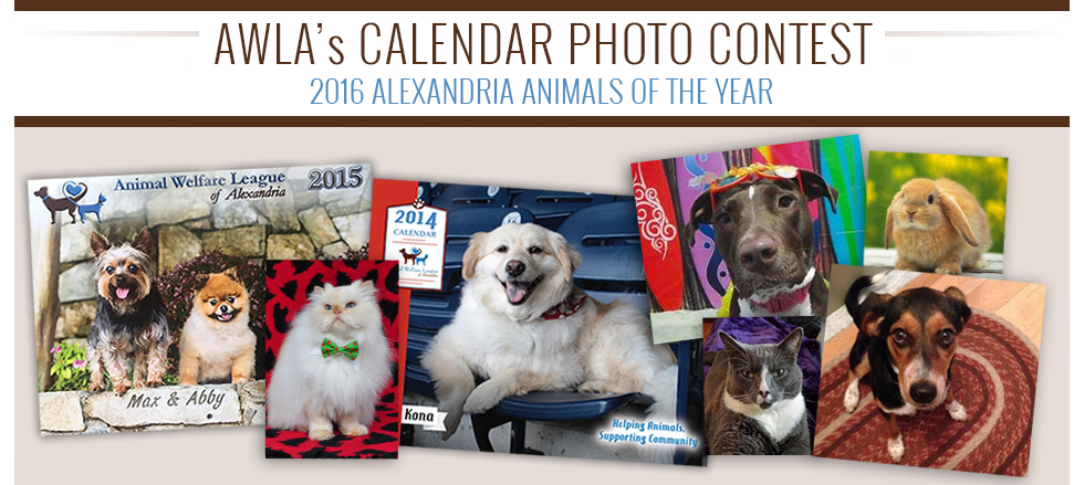 AWLA-Calendar-Photo-Contest-2016
