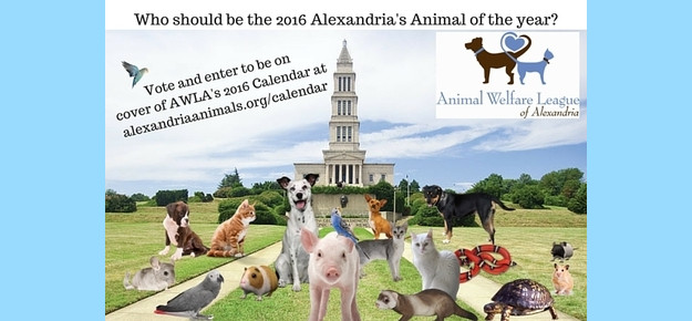 Who-should-be-the-2016-Alexandrias-Animal-1_phixr