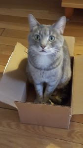 Chester finds a box to sit in