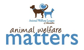 Read the winter edition of Animal Welfare Matters newsletter