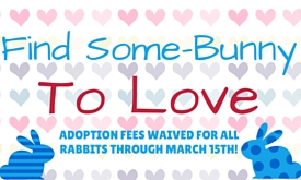 Rabbit adoption fees waived until March 15, 2016!