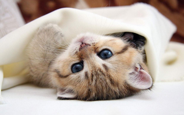 Banner - kitten