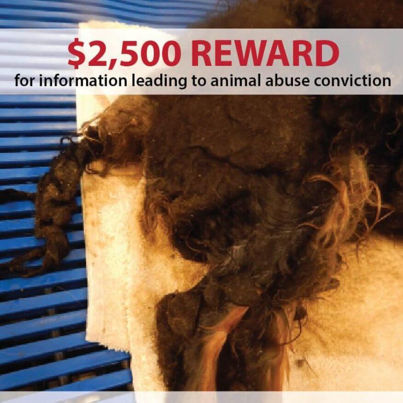 Neglected Dog – Reward!