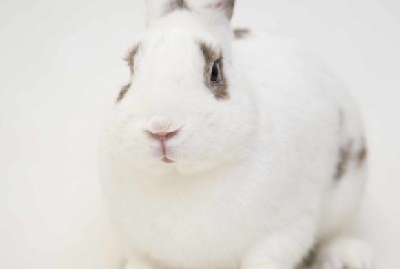 Hoarded Rabbits Find New Homes Following Abuse Conviction