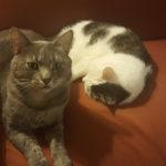 Chester and Bandit - AWLA