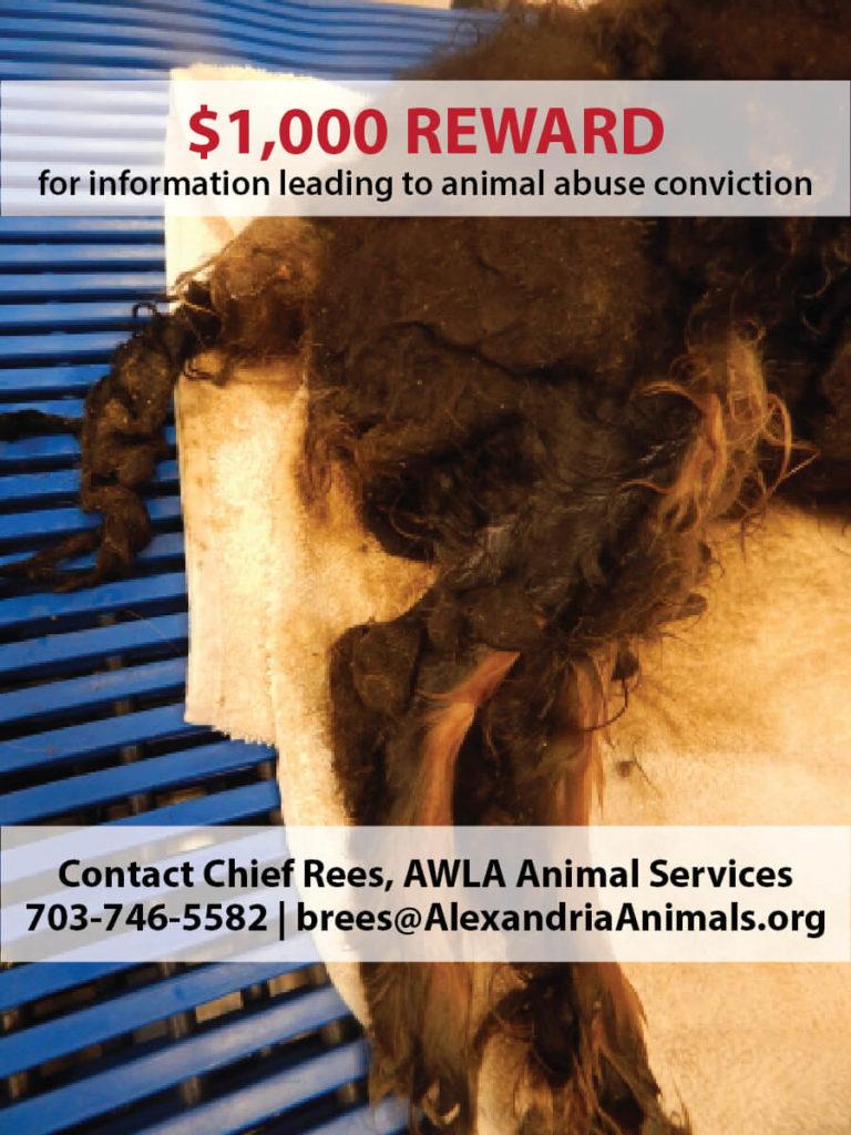 Press Release - Neglected Dog - Reward Offered