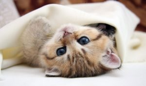AWLA - Kitten