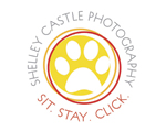 Shelley Castle Photography - AWLA Animal Champion