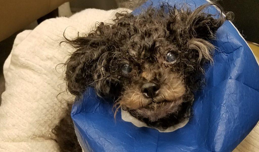 AWLA - Found in the Potomac: Dog saved by Good Samaritan