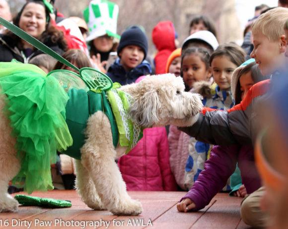 AWLA - Fun Dog Show