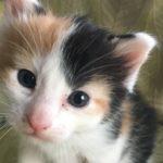 AWLA - Kitten Shower