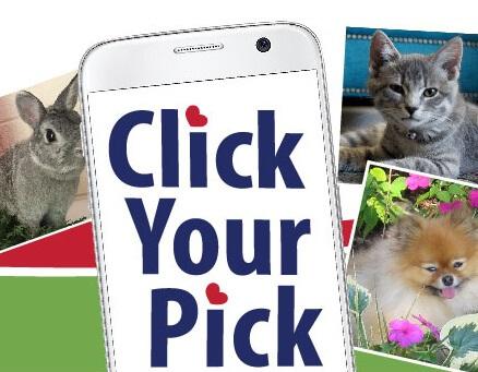 Click Your Pick - Pet Photo Contest 2018 - AWLA
