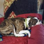 Ace Recovering - Adopt Me at AWLA