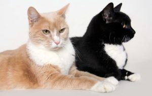 Meet Midnight and Daybreak - Available for Adoption at AWLA (Cats)