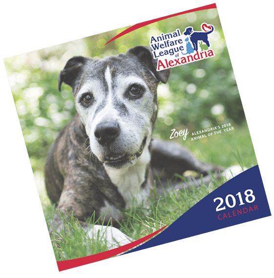 Congratulations to Zoey for AWLA 2018 Animal of the Year