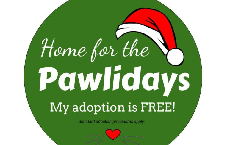 Home for the Paw-lidays