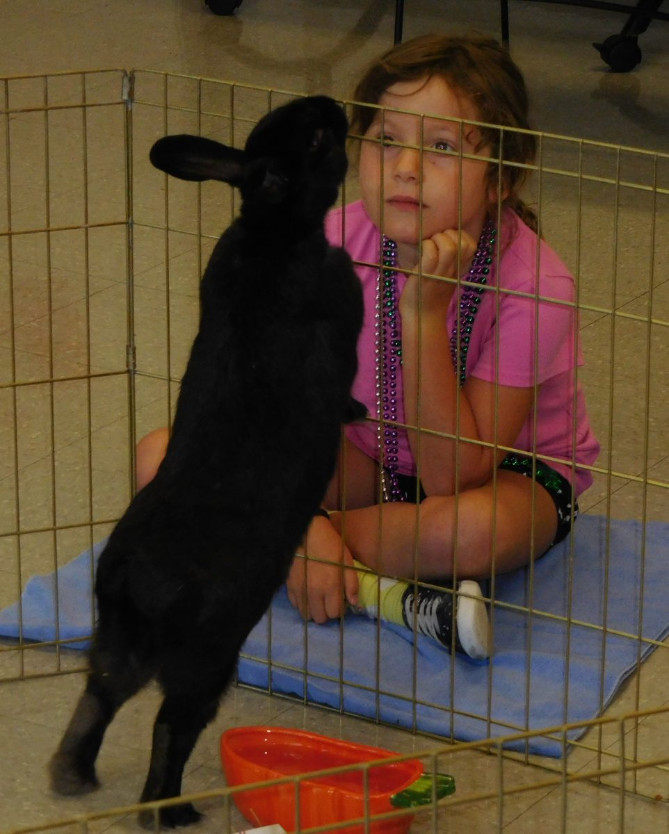 Alexandria Dog Day Care