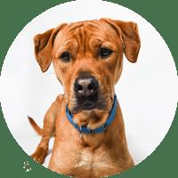 Alexandria Animals - Animal Welfare League of Alexandria | AWLA