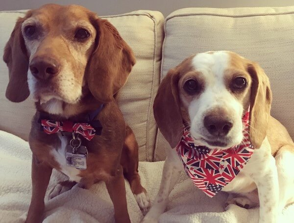 Meet Charlie and Gracie, February's Animal of the Month at AWLA, 2019