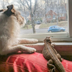 'Cuddle Time' Can Mean Cozying Up with a Rabbit or Lizard