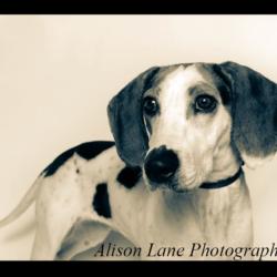 The Beagle Bugle: Summer 2019