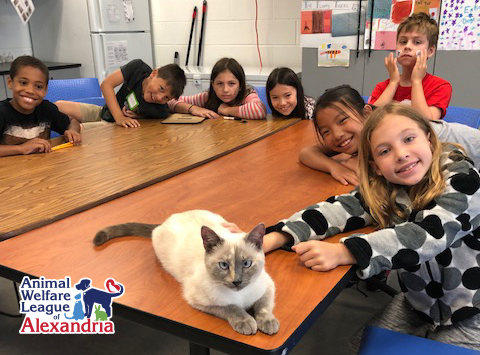 2020 Awla Summer Camp Alexandria Animals